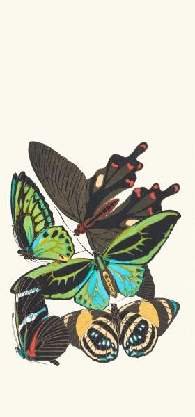 Papillons, Pl. 1 by Emile-Allain Séguy Wallpaper