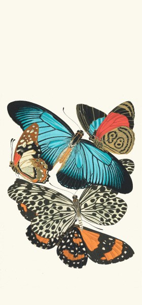 Papillons, Pl. 11 by Emile-Allain Séguy Wallpaper