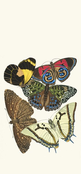 Papillons, Pl. 12 by Emile-Allain Séguy Wallpaper