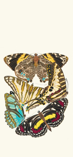 Papillons, Pl. 5 by Emile-Allain Séguy Wallpaper