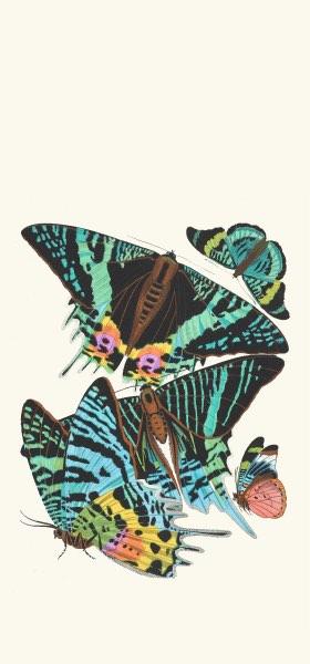 Papillons, Pl. 7 by Emile-Allain Séguy Wallpaper