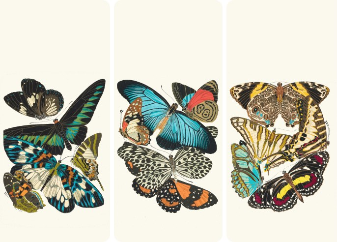 Papillons by Emile-Allain Séguy - Wallpaper Collection