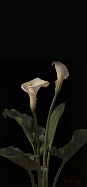 Calla Lilies by George Cochran Lambdin Wallpaper