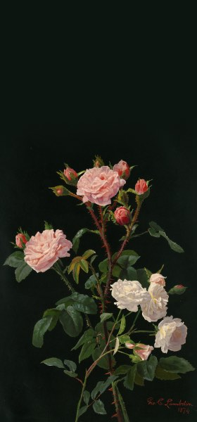 Pink And White Roses by George Cochran Lambdin Wallpaper