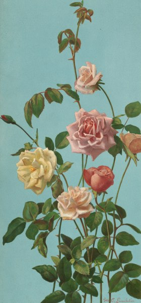 Tea Rose And Blush Roses by George Cochran Lambdin Wallpaper