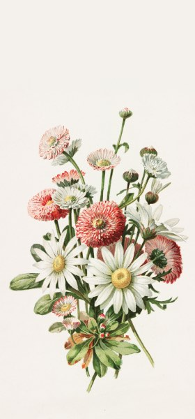 Daisies by Alois Lunzer Wallpaper
