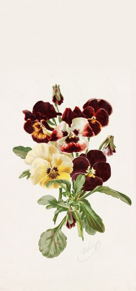 Pansies by Alois Lunzer Wallpaper