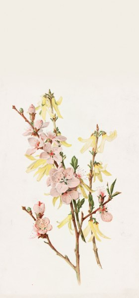 Peach Blossoms and Forsythia by Alois Lunzer Wallpaper