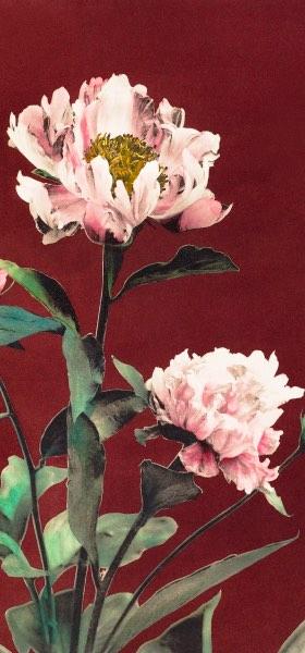 Hærdaceous Peony Pink by Ogawa Kazumasa Wallpaper